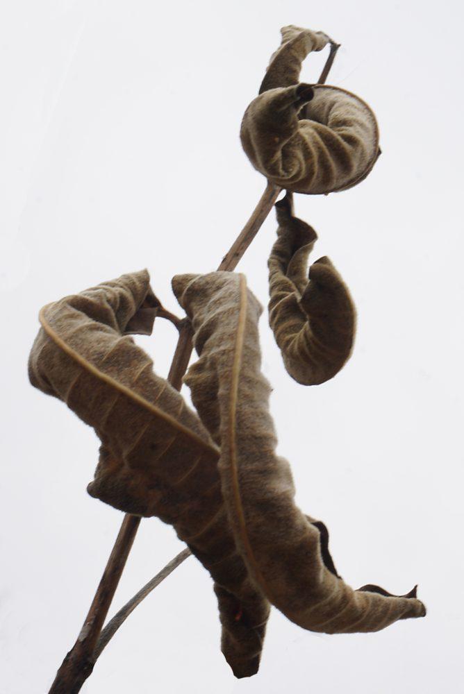 dried leaves x