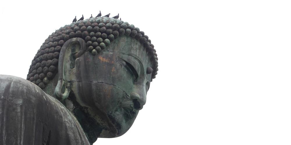 Kamakura Buddha head pigeons x