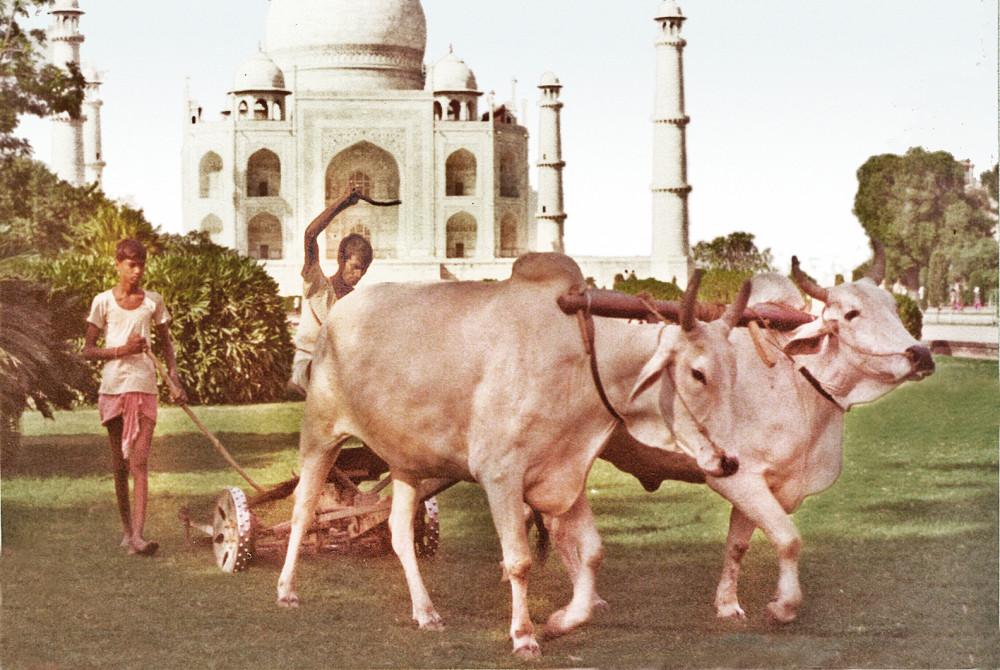 Taj Mahal lawn mower copy