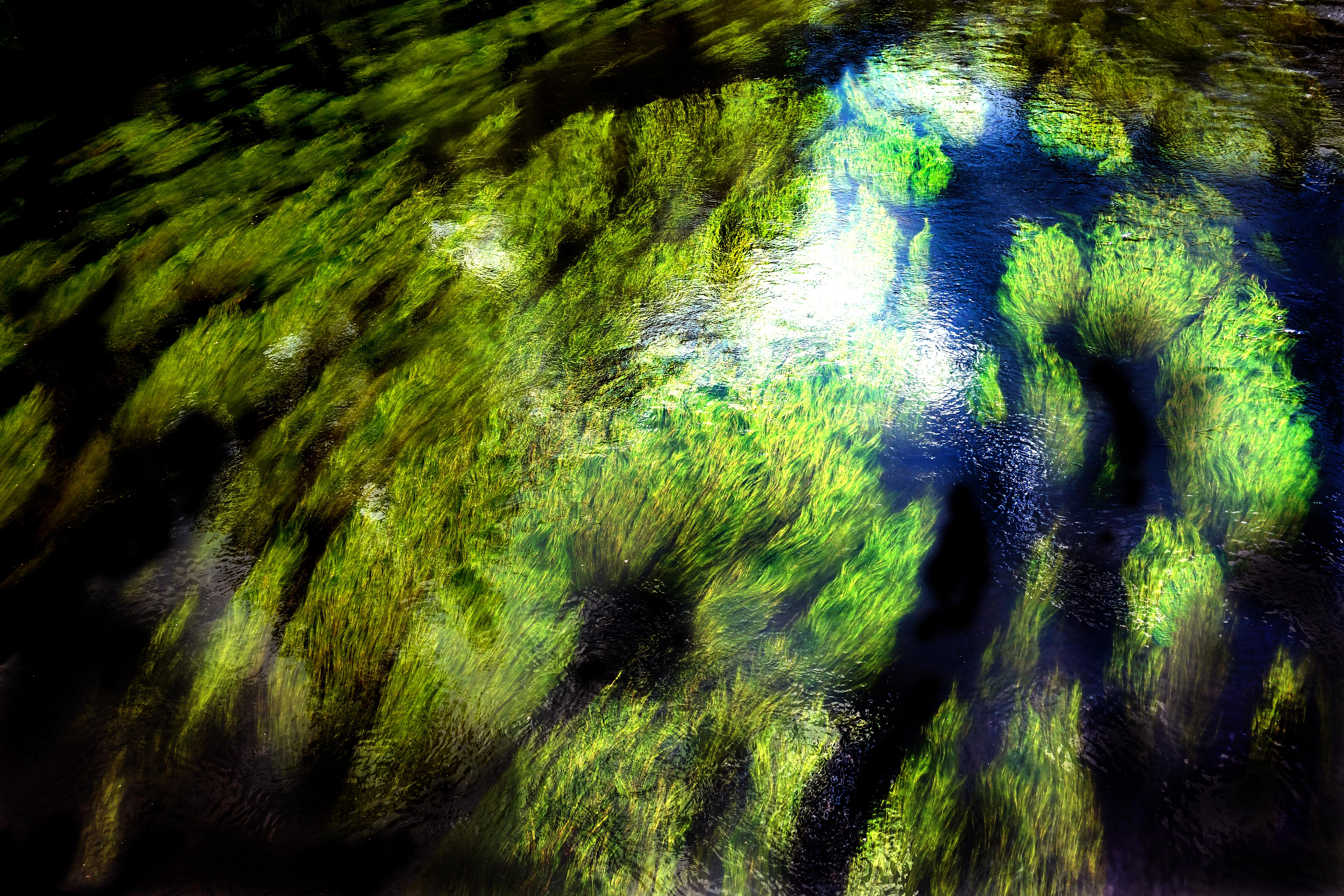 g 003 river grass